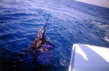 deep sea fishing, mexico fishing, Mazatlan Sportfishing